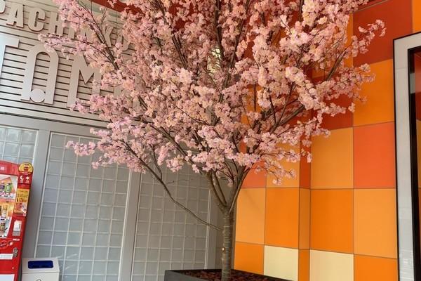 TAMAYA本店の春の装飾のサムネイル