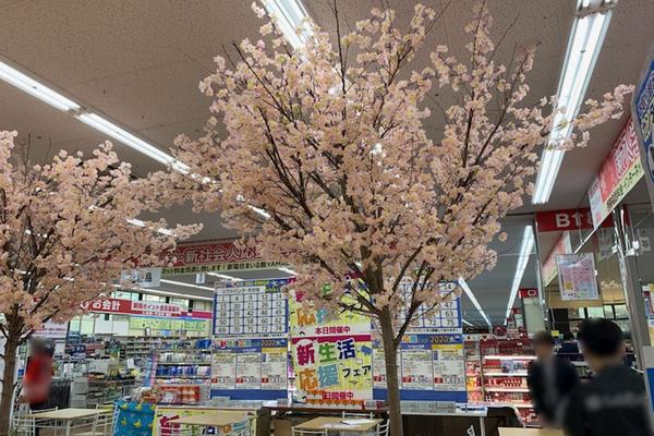 家電量販店の桜の木